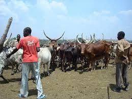 Boucherie-charcuterie en Afrique