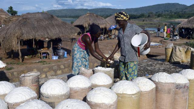 Creation d'unité de transformation du manioc en Gari et en farine panifiable de haute qualité
