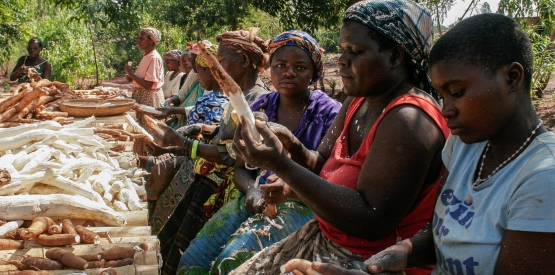 Creation d'industries de transformation du manioc en Afrique
