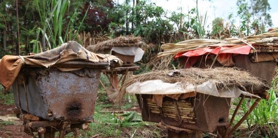 Appui à la filière miel en Afrique