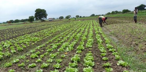 Promotion de l'agroforesterie en afrique